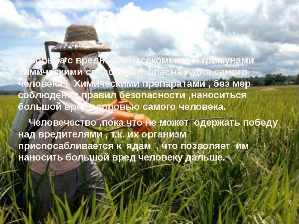 Вывод : Борьба с вредными насекомыми и грызунами химическими средствами опасн...