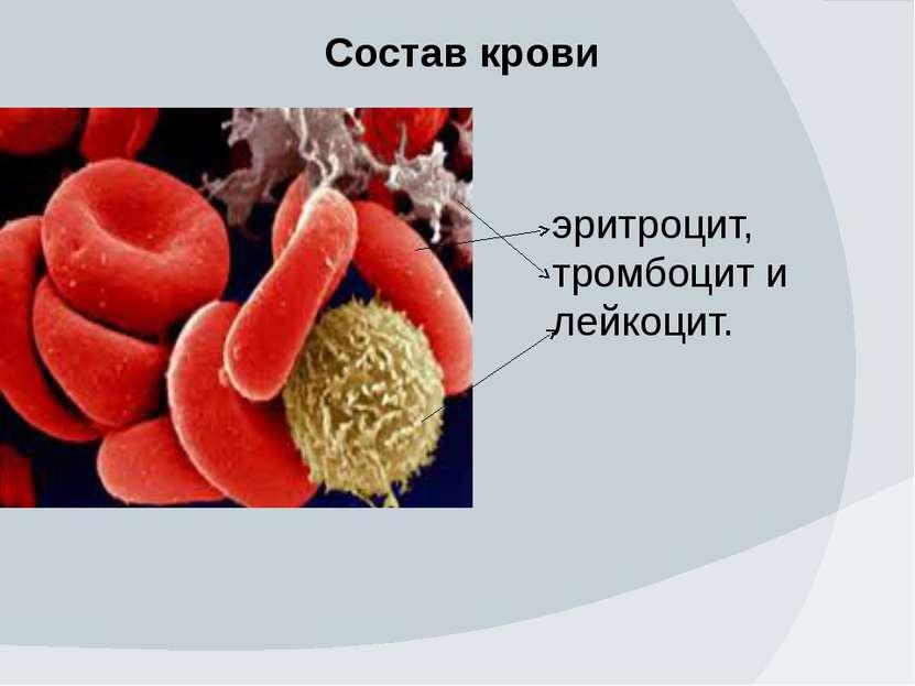 Состав крови эритроцит, тромбоцит и лейкоцит.