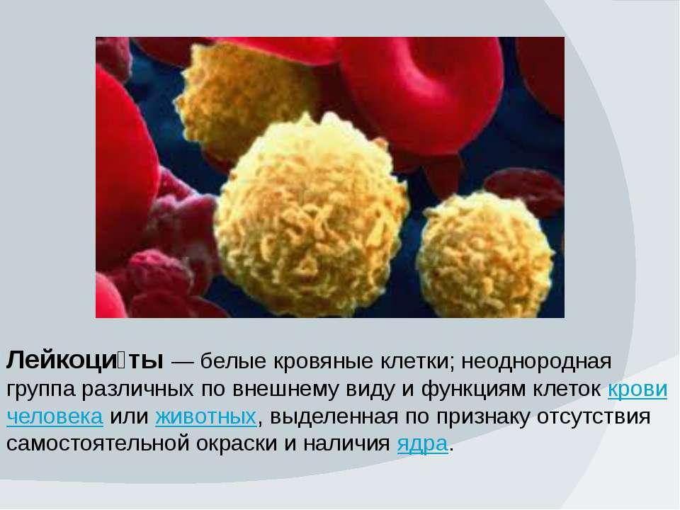 Лейкоци ты — белые кровяные клетки; неоднородная группа различных по внешнему...