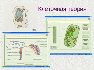Клеточная теория