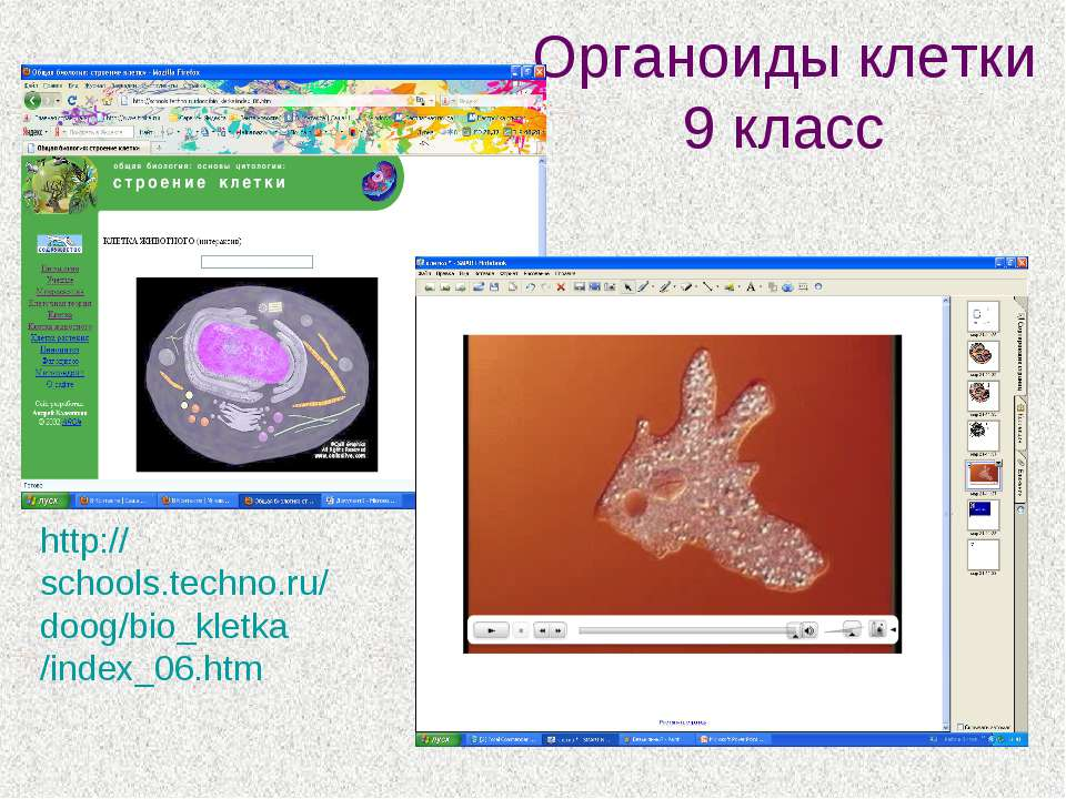 Органоиды клетки 9 класс http://schools.techno.ru/doog/bio_kletka/index_06.htm
