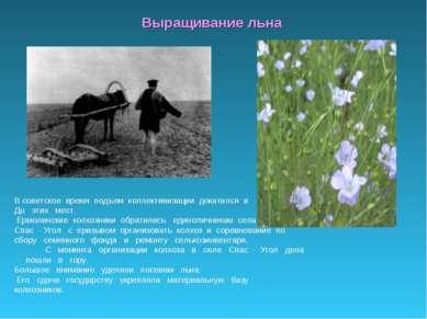 Выращивание льна В советское время подъем коллективизации докатился и До этих...
