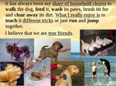 It has always been my share of household chores to walk the dog, feed it, was...