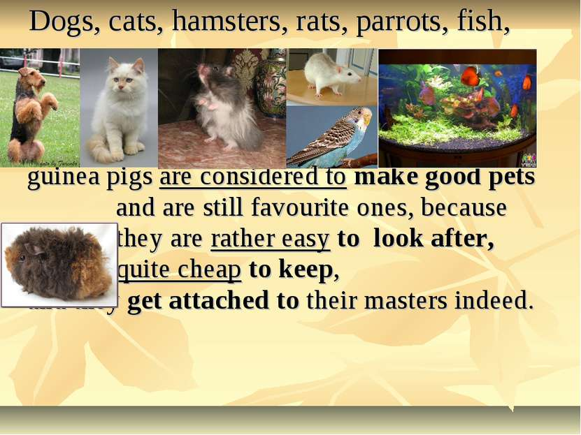 Dogs, cats, hamsters, rats, parrots, fish, guinea pigs are considered to make...