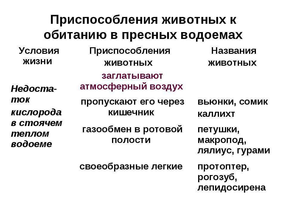 Приспособления животных к обитанию в пресных водоемах Условия жизни Приспособ...