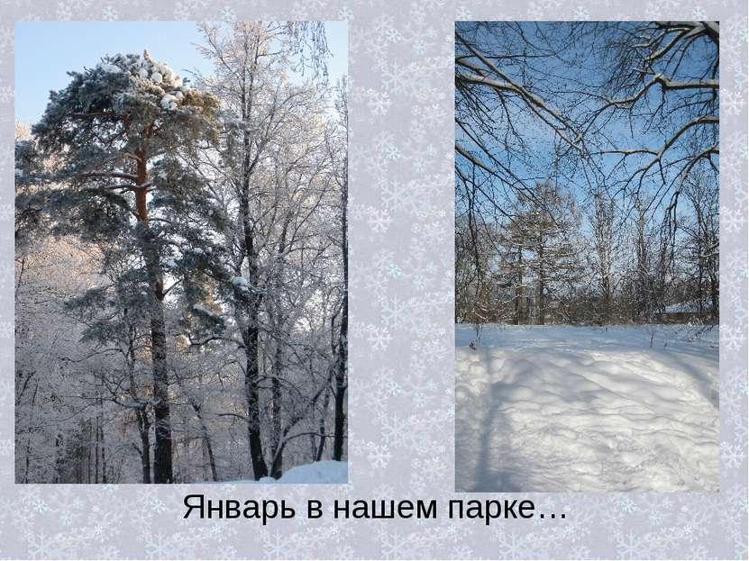 Январь в нашем парке…