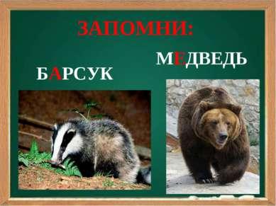 МЕДВЕДЬ БАРСУК ЗАПОМНИ: