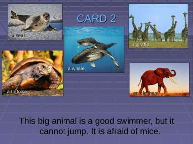 CARD 2 This big animal is a good swimmer, but it cannot jump. It is afraid of...
