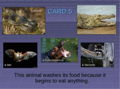CARD 5 This animal washes its food because it begins to eat anything. a snake...