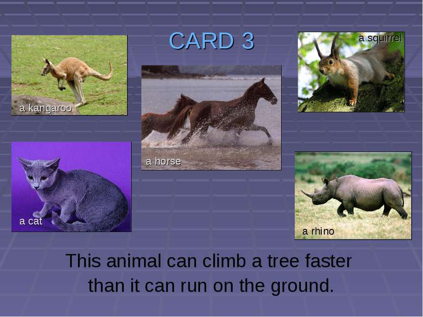 CARD 3 This animal can climb a tree faster than it can run on the ground. a k...