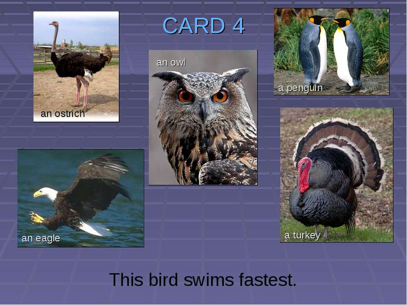 CARD 4 This bird swims fastest. an ostrich an owl an eagle a turkey a penguin