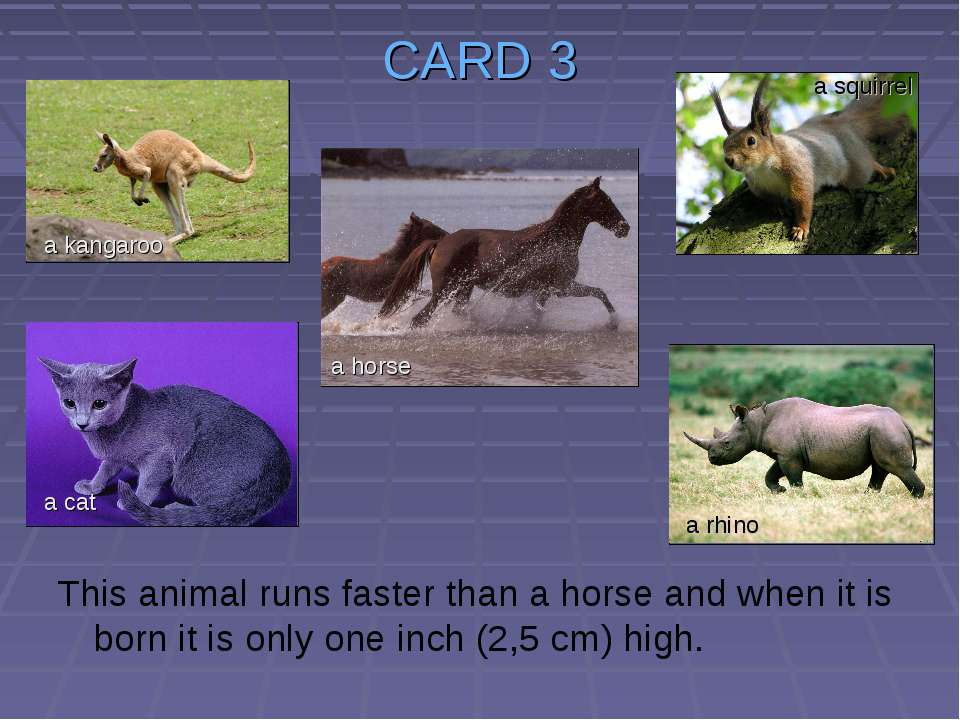 CARD 3 This animal runs faster than a horse and when it is born it is only on...