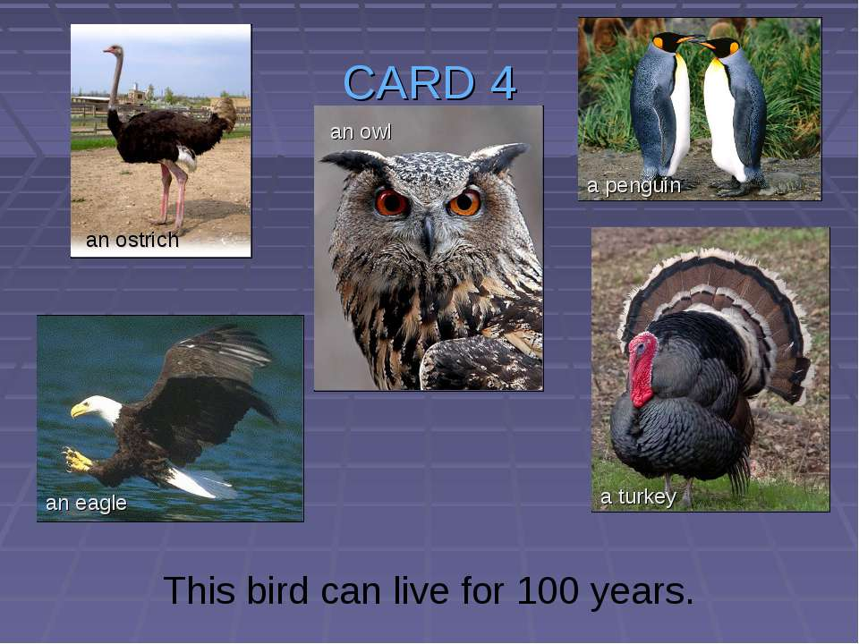 CARD 4 This bird can live for 100 years. an ostrich an owl an eagle a turkey ...