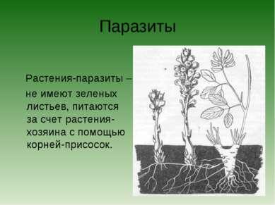 Паразиты Растения-паразиты – не имеют зеленых листьев, питаются за счет расте...