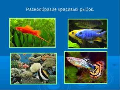 Разнообразие красивых рыбок.