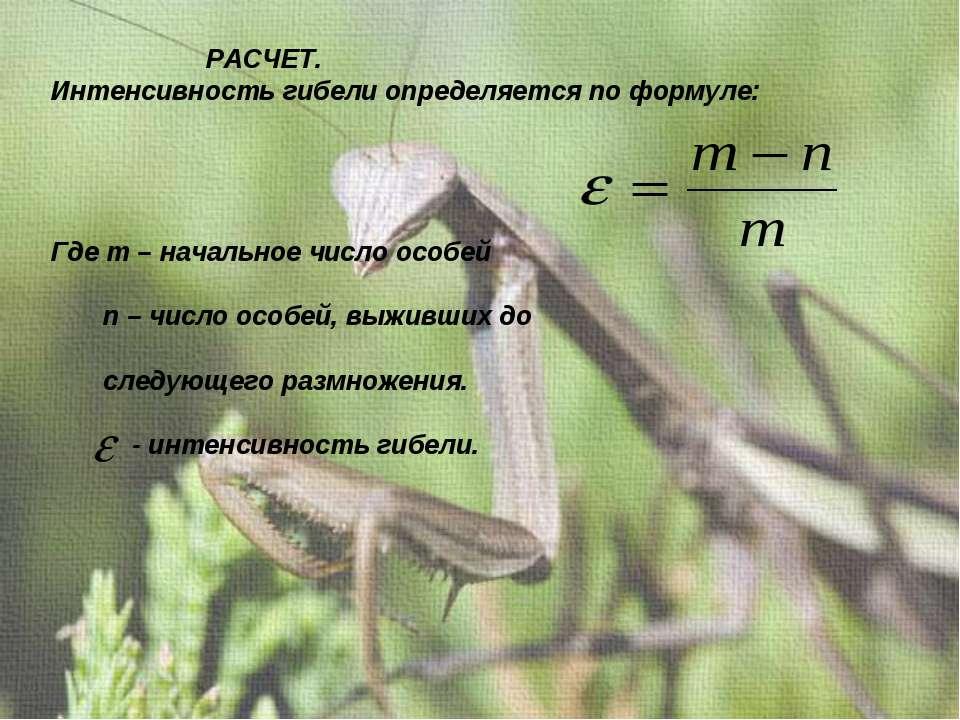 РАСЧЕТ. Интенсивность гибели определяется по формуле: Где m – начальное число...