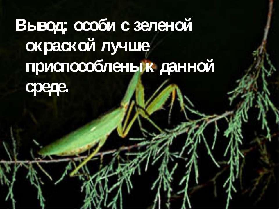Вывод: особи с зеленой окраской лучше приспособлены к данной среде.
