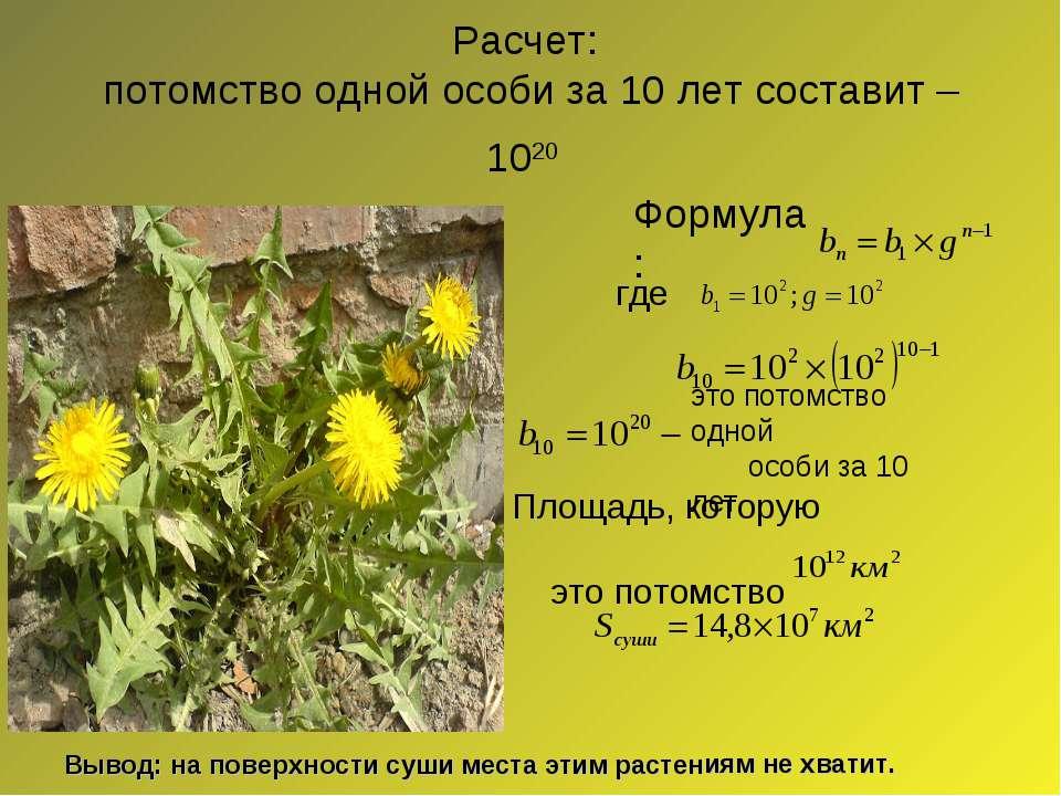 Расчет: потомство одной особи за 10 лет составит – 1020 Вывод: на поверхности...