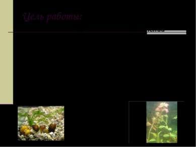 Цель работы: выявить, у каких водных растений активнее выделяется кислород. И...