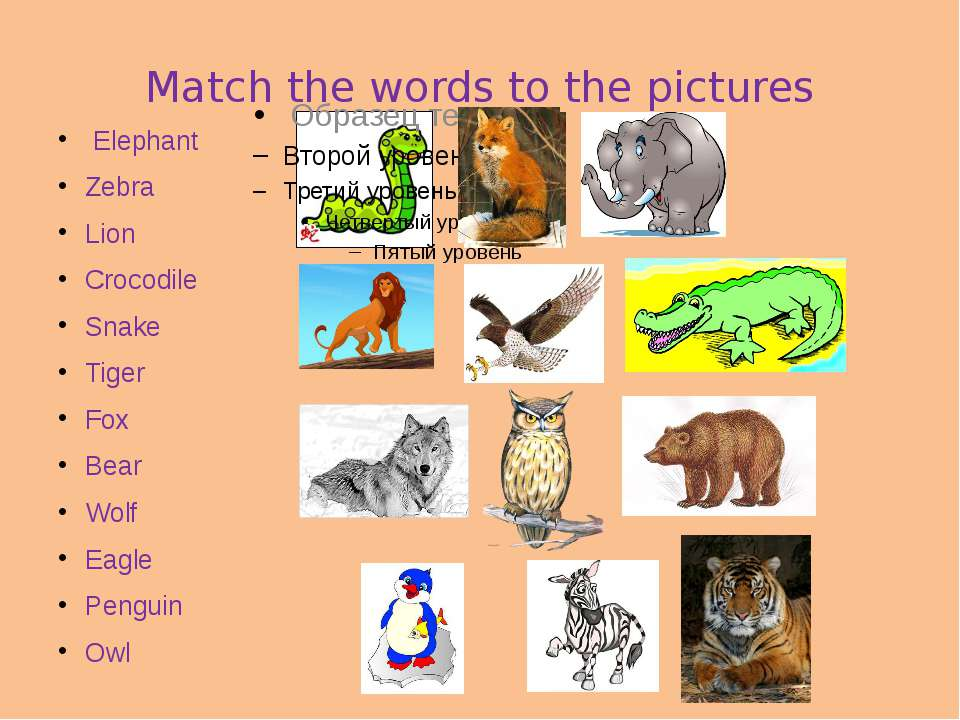 Match the words to the pictures Elephant Zebra Lion Crocodile Snake Tiger Fox...