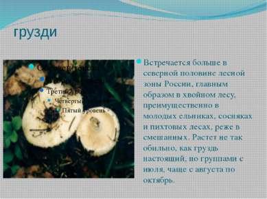грузди Встречается больше в северной половине лесной зоны России, главным обр...