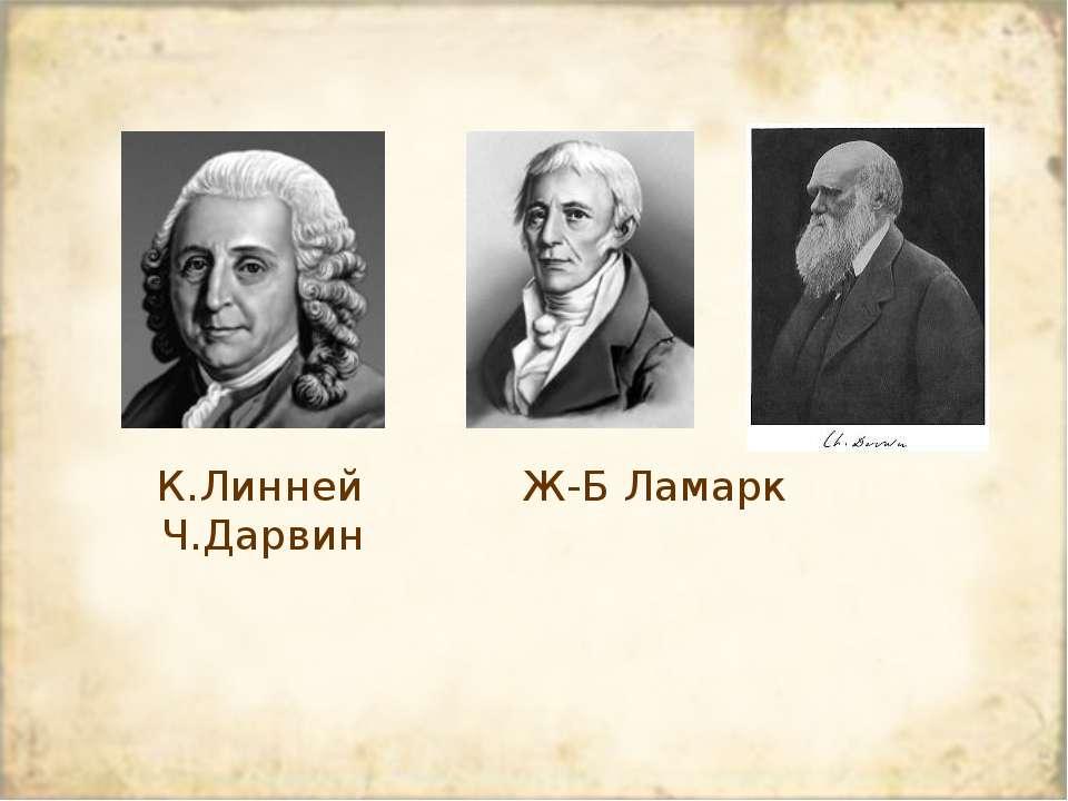 К.Линней Ж-Б Ламарк Ч.Дарвин