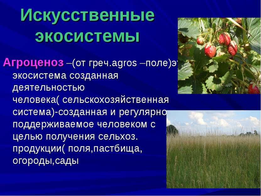 Искусственные экосистемы Агроценоз –(от греч.agros –поле)это экосистема созда...