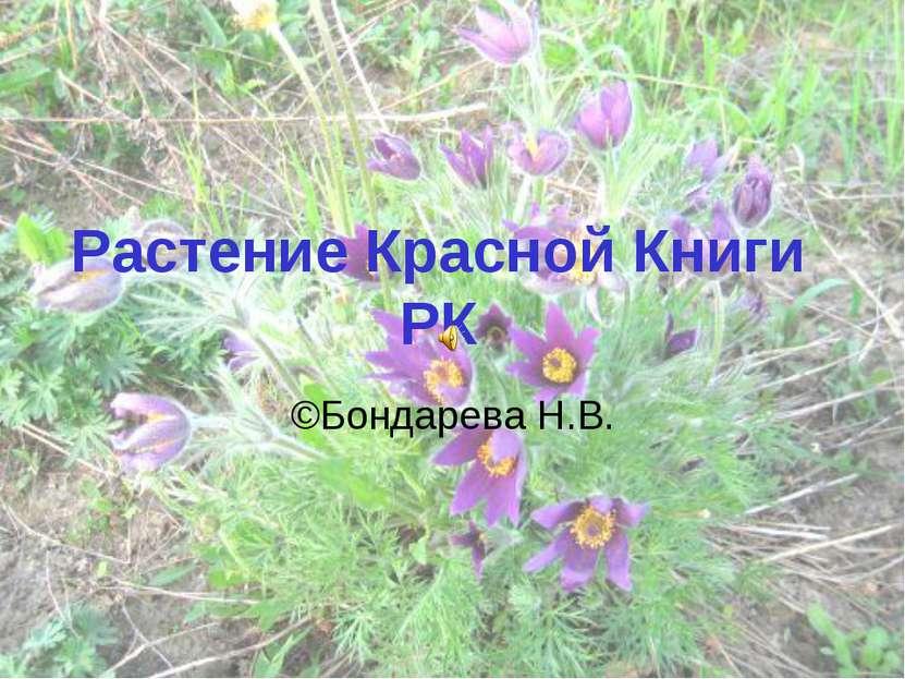 Растение Красной Книги РК ©Бондарева Н.В.
