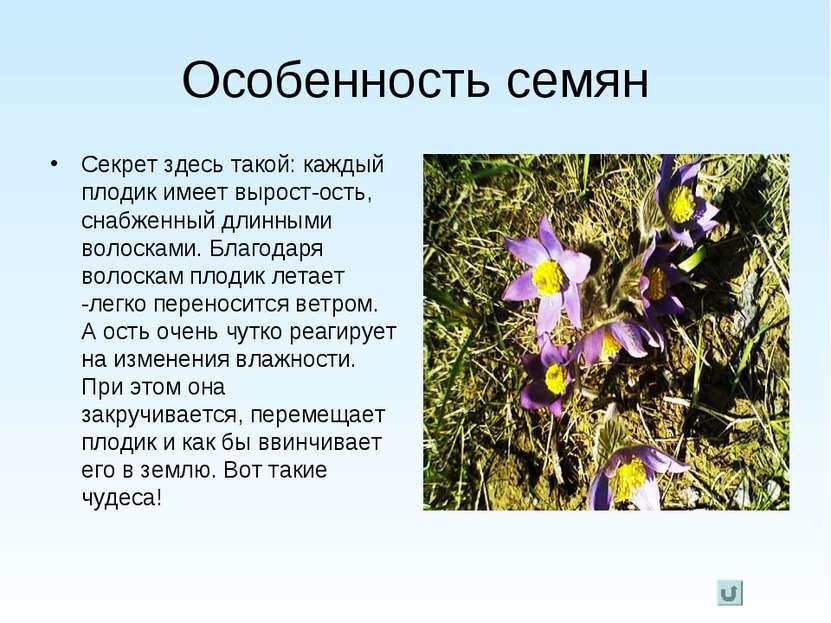 Особенность семян Секрет здесь такой: каждый плодик имеет вырост-ость, снабже...