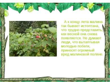 А к концу лета малина так бывает истоптана, что трудно представить, как весно...