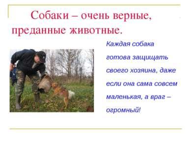 Собаки – очень верные, преданные животные. Каждая собака готова защищать свое...