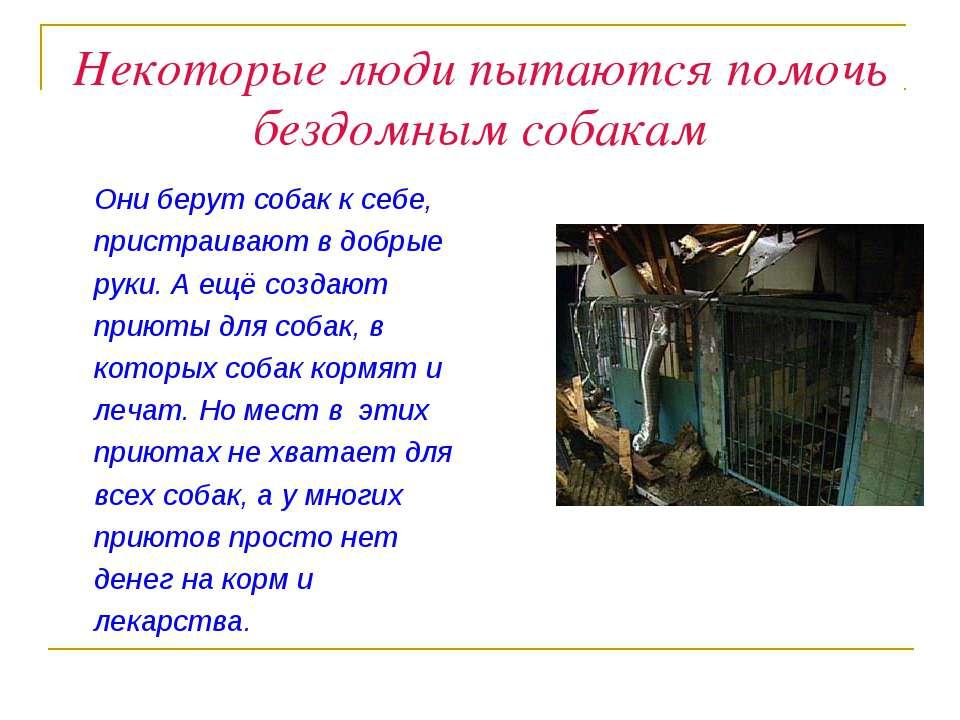 Некоторые люди пытаются помочь бездомным собакам Они берут собак к себе, прис...