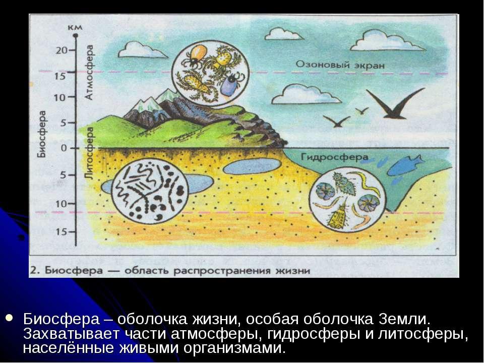 Биосфера – оболочка жизни, особая оболочка Земли. Захватывает части атмосферы...