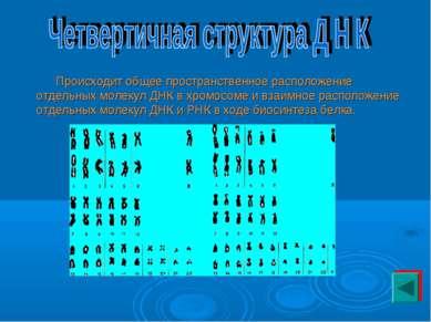 Происходит общее пространственное расположение отдельных молекул ДНК в хромос...