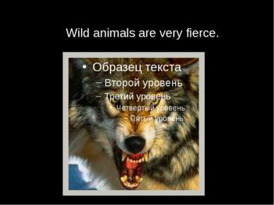 Wild animals are very fierce.