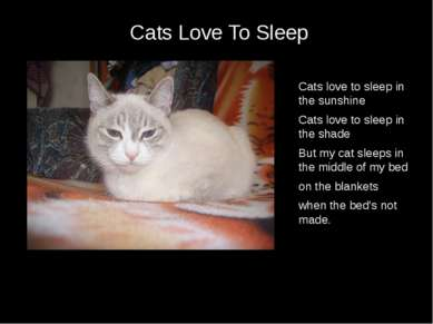 Cats Love To Sleep Cats love to sleep in the sunshine Cats love to sleep in t...