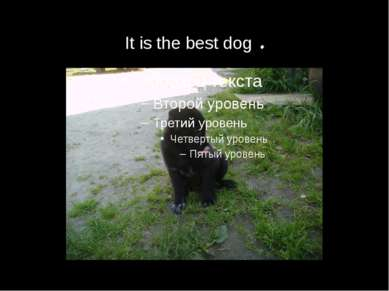It is the best dog .