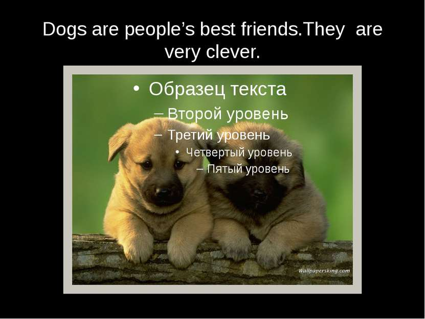 Dogs are people's best friends.They are very clever.