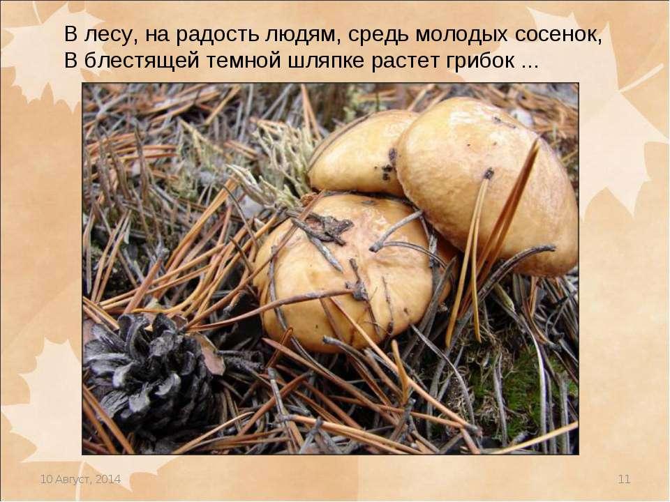 * * В лесу, на радость людям, средь молодых сосенок, В блестящей темной шляпк...