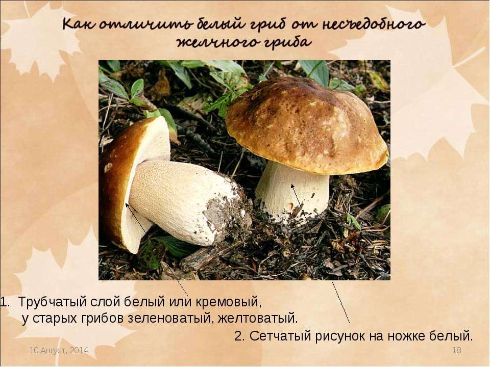 * * Трубчатый слой белый или кремовый, у старых грибов зеленоватый, желтоваты...