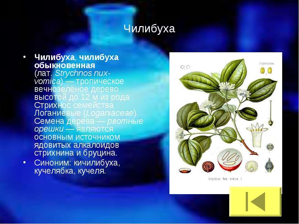 Чилибуха Чилибуха, чилибуха обыкновенная (лат.Strychnos nux-vomica)— тропич...