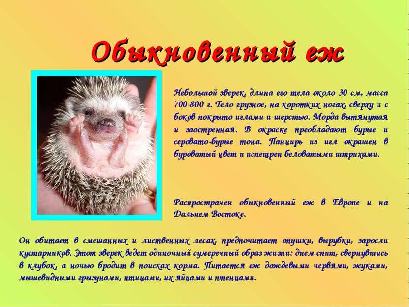Обыкновенный еж Небольшой зверек, длина его тела около 30 см, масса 700-800 г...