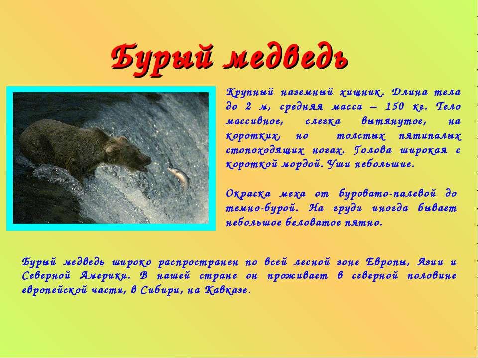Бурый медведь Крупный наземный хищник. Длина тела до 2 м, средняя масса – 150...