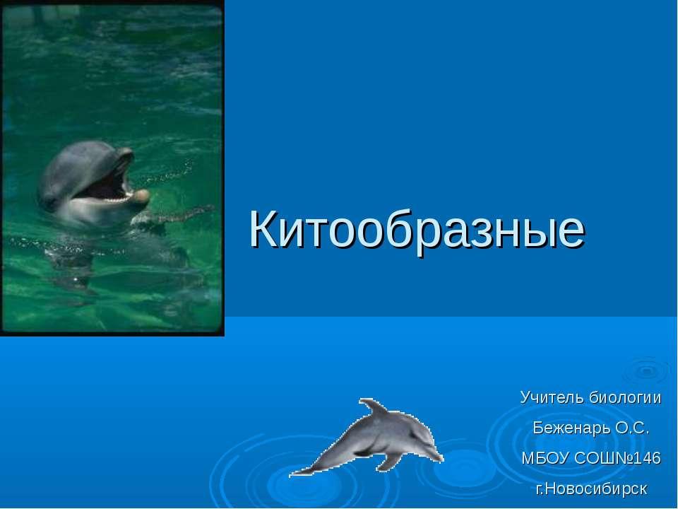 Китообразные Учитель биологии Беженарь О.С. МБОУ СОШ№146 г.Новосибирск