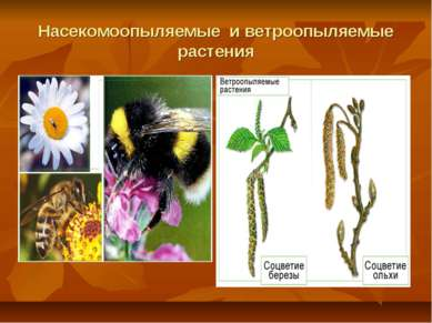 Насекомоопыляемые и ветроопыляемые растения