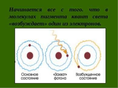 Начинается все с того. что в молекулах пигмента квант света «возбуждает» один...