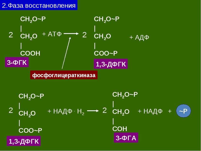 2.Фаза восстановления CH2O~P | CH2O | CОOH 3-ФГК 2 + АТФ CH2O~P | CH2O | CОO~...