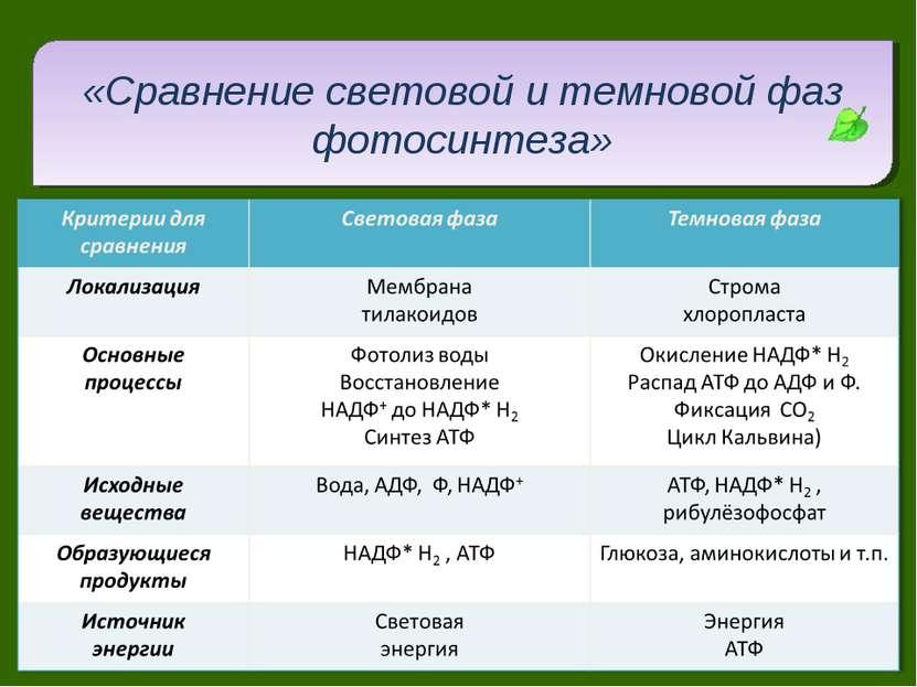 «Сравнение световой и темновой фаз фотосинтеза»