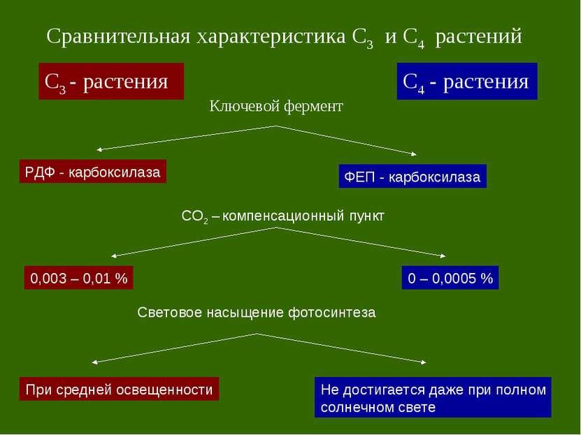 С3 - растения С4 - растения Сравнительная характеристика С3 и С4 растений Клю...