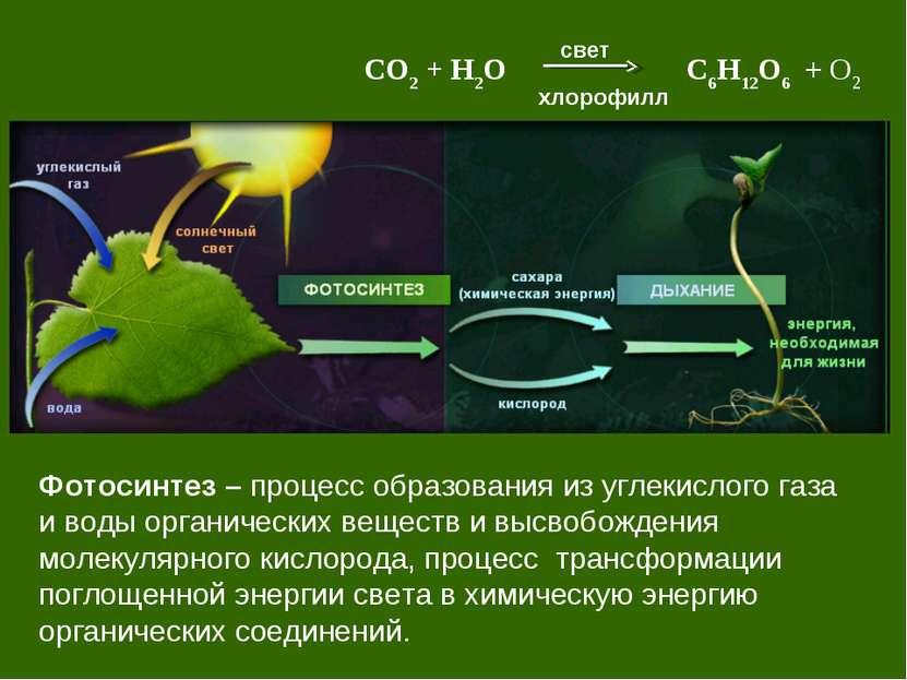 Фотосинтез – процесс образования из углекислого газа и воды органических веще...